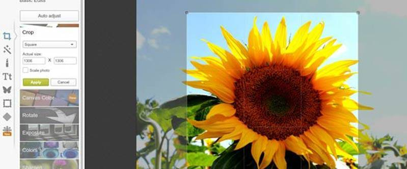 Picmonkey screenshot with sunflower