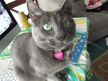 Maria's cat