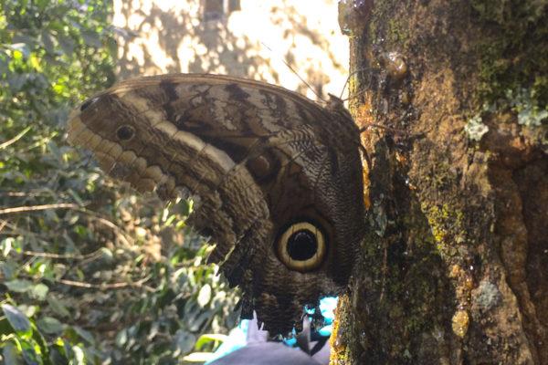 butterfly-snake