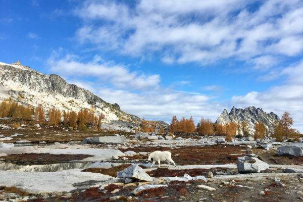 Shea_Enchantments4